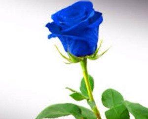 Blue Tose